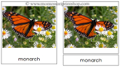 Butterfly Cards - Printable Montessori Materials by Montessori Print Shop.