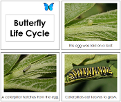 Toddler Butterfly Life Cycle Book - Printable Toddler Montessori Materials by Montessori Print Shop.