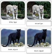 Big Cats Safari Toob Cards - Printable Montessori Toob Cards by Montessori Print Shop.