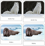 Arctic Safari Toob Cards - Printable Montessori Toob Cards by Montessori Print Shop.