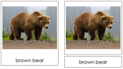Bear Cards - Printable Montessori Learning Materials by Montessori Print Shop.