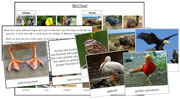 Animal Adaptation: Birds & Feet - Printable Montessori Learning Materials by Montessori Print Shop.