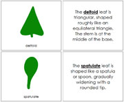 Botany Cabinet Leaf Shapes Book - Printable Montessori Learning Materials by Montessori Print Shop.
