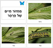 Hebrew Butterfly Life Cycle Cards - Printable Montessori Hebrew Materials for home and school.