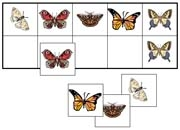 Butterfly Match-Up & Memory Game - Printable Montessori Learning Materials by Montessori Print Shop.