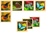 Butterfly Matching Cards - Printable Montessori Materials by Montessori Print Shop.