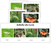 Butterfly Life Cycle Sequence Cards - Printable Montessori Learning Materials by Montessori Print Shop.