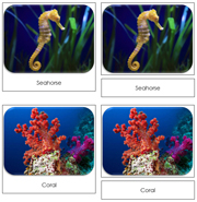 Coral Reef Safari Toob Cards - Printable Montessori Toob Cards by Montessori Print Shop.