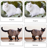 Domestic Cats Safari Toob Cards - Printable Montessori Toob Cards by Montessori Print Shop.