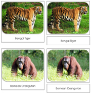 Endangered Species (Land) Safari Toob Cards - Printable Montessori Toob Cards by Montessori Print Shop.