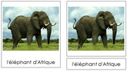 French African Rainforest Animals - Printable French Montessori Learning Materials for home and school.