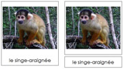 French Amazon Rainforest Animals - Printable French Montessori Learning Materials for home and school.
