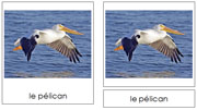 French Bird Cards - Printable Montessori French Learning Materials for home and school.