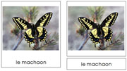 French Butterfly Cards - Printable French Montessori Learning Materials for home and school.