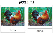 Farm Animal Cards in Hebrew - Printable Montessori Hebrew Materials for home and school.