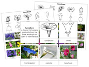 Flower Shapes - Printable Montessori science materials by Montessori Print Shop.