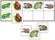 Frog Match-Up & Memory Game - FREE Printable Montessori Learning Materials by Montessori Print Shop.