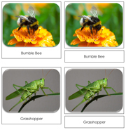 Insects Toob Safari Cards - Printable Montessori Toob Cards by Montessori Print Shop.