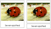Lady Beetle Cards - Printable Montessori Learning Materials by Montessori Print Shop.