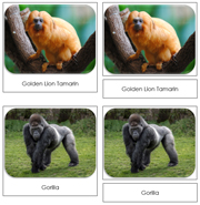Monkeys and Apes Safari Toob Cards - Printable Montessori Toob Cards by Montessori Print Shop.