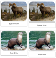 North American Wildlife Safari Toob Cards - Printable Montessori Toob Cards by Montessori Print Shop.