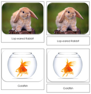 Pets Safari Toob Cards - Printable Montessori Toob Cards by Montessori Print Shop.