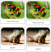 Rainforest Safari Toob Cards - Printable Montessori Toob Cards by Montessori Print Shop.