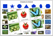 Shapes in Nature Sorting Cards - Printable Montessori Learning Materials by Montessori Print Shop.