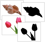 Nature Objects and Silhouettes - Printable Montessori Materials