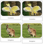 The Land Down Under Safari Toob Cards - Printable Montessori Toob Cards by Montessori Print Shop.