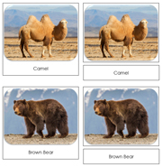 Wild Safari Toob Cards - Printable Montessori Toob Cards by Montessori Print Shop.