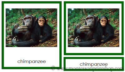 Animals from Africa 3-part cards - Printable Montessori learning materials
