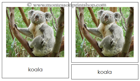 Animals from Australia/Oceania 3-part cards (NCB) - Printable Montessori learning materials