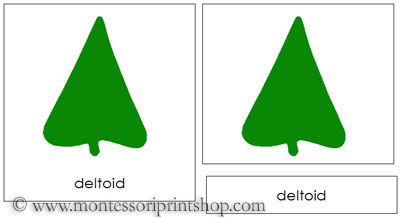 Botany Cabinet Leaf Shapes 3-Part Cards - Printable Montessori Botany Cards for Montessori Learning at home and school.