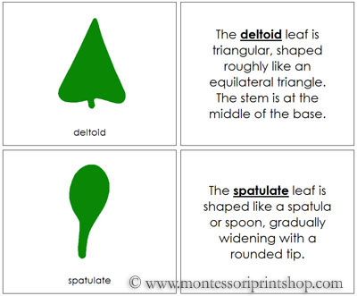 Botany Cabinet Leaf Shapes Book - Printable Montessori Botany Materials for Montessori Learning at home and school.
