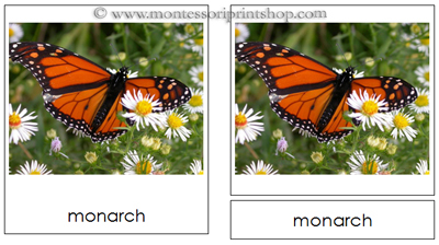 Butterflies - Montessori 3-Part Classified Cards for Montessori Learning at home and school.