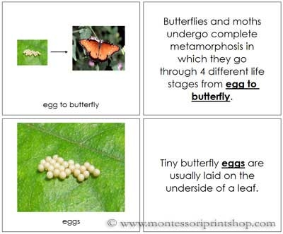 Butterfly Life Cycle Book - Printable Montessori Nomenclature Materials for Montessori Learning at home and school.