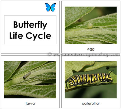 Butterfly Life Cycle Cards - Printable Montessori Toddler Materials for Montessori Learning at home and school.