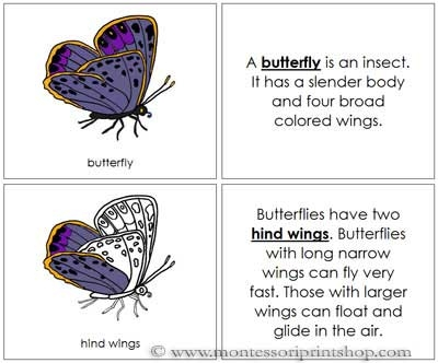 Butterfly Nomenclature Book - Printable Montessori Nomenclature Materials for Montessori Learning at home and school.
