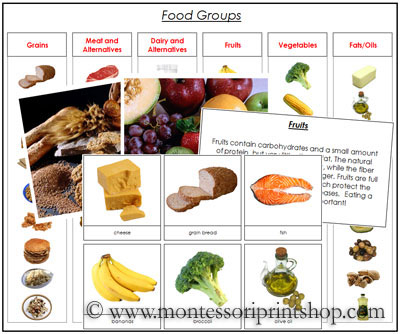 Food Group Sorting Cards - Printable Montessori Science Materials for Montessori Learning at home and school.