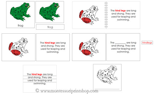 Frog Definition Nomenclature Set (Red) - Printable Montessori Nomenclature materials for Montessori Learning at home and school.