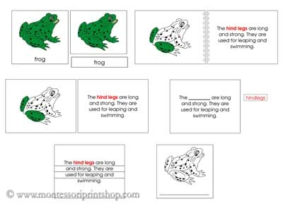 Frog Definition Nomenclature Set - Printable Montessori Nomenclature materials for Montessori Learning at home and school.