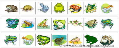 Frog Cutting Strips - Printable Montessori materials that save teachers time for Montessori Learning at home and school.
