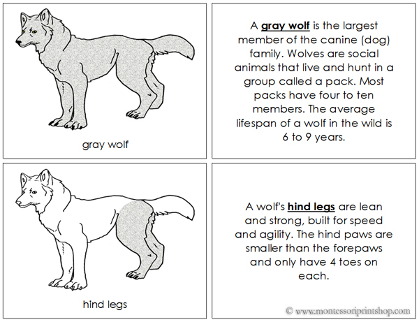 Gray Wolf Nomenclature Book - Printable Montessori Nomenclature Materials for Montessori Learning at home and school.