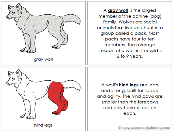 Gray Wolf Nomenclature Book (red) - Printable Montessori Nomenclature Materials for Montessori Learning at home and school.