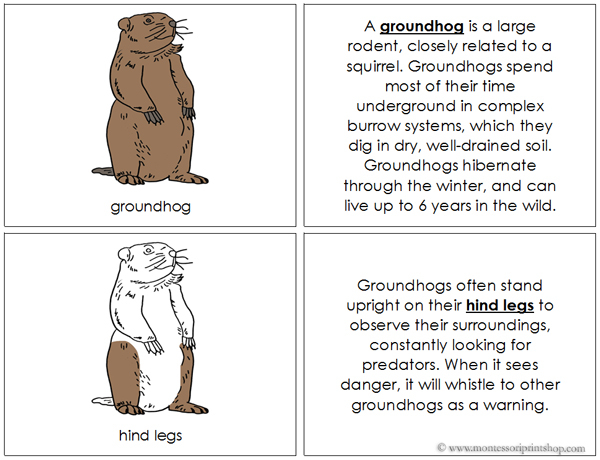 Groundhog Nomenclature Book - Printable Montessori Nomenclature Materials for Montessori Learning at home and school.