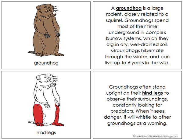 Groundhog Nomenclature Book (red) - Printable Montessori Nomenclature Materials for Montessori Learning at home and school.