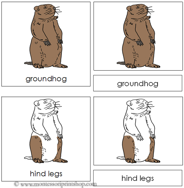 Groundhog Nomenclature Cards - Printable Montessori Nomenclature Materials for Montessori Learning at home and school.