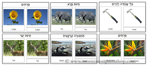 Hebrew 3-Part Classified Cards: Flowers, Wild Animals, Hand Tools, Woodland Animals, Ground Transporation, Flowers Set 2. Printable Hebrew Montessori materials.
