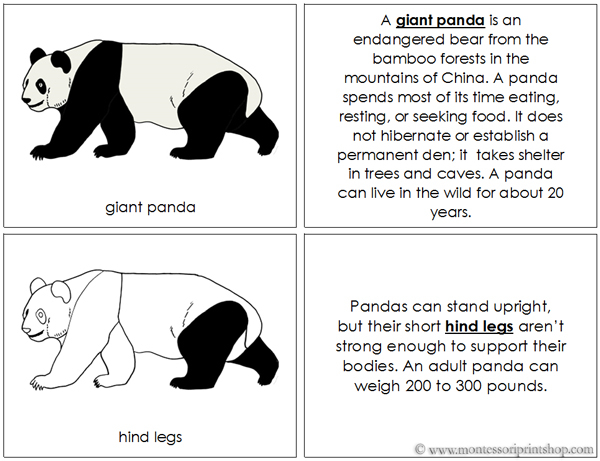 Giant Panda Nomenclature Book - Printable Montessori Nomenclature Materials for Montessori Learning at home and school.